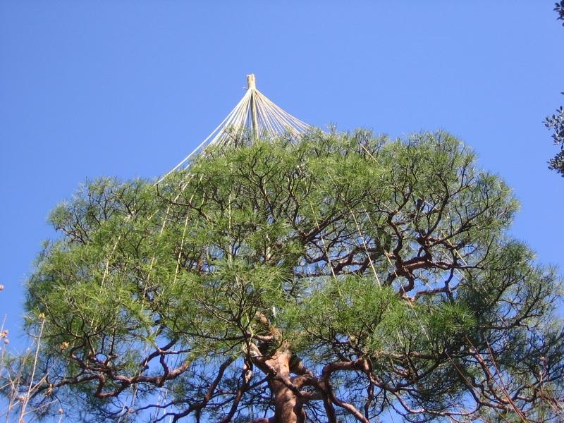 tree82.jpg